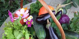 Moda na zdrowy ogród
