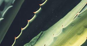 Aloes w płynie od DuoLife – jakie są jego właściwości?