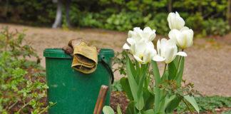 Dlaczego warto mieć własny domowy ogródek?